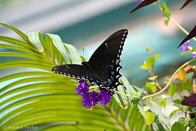 Photograph - Flutter by Susan Herber
