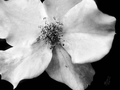 Photograph - Flutterbye Rose In Black And White by Louise Kumpf