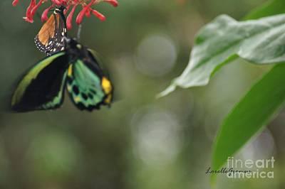 Photograph - Fluttering Beauty by Lorelle Gromus
