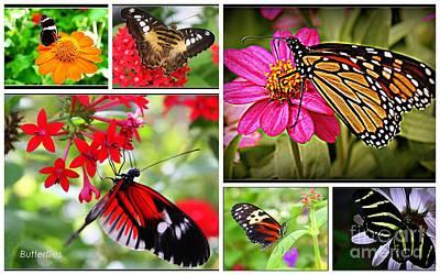 Fluttering Butterflies Original by Dora Sofia Caputo Photographic Art and Design