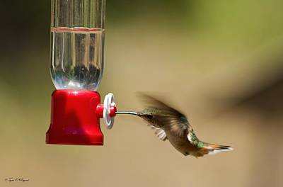 Photograph - Fluttering Hummingbird by Tyra  OBryant