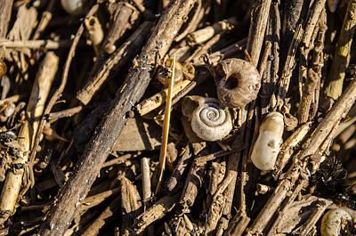 Samantha Morris Photograph - Fluvial Microlife by Samantha Morris