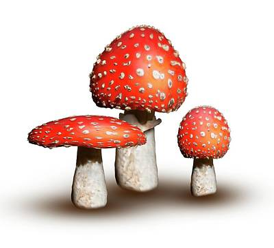 Fruiting Body Photograph - Fly Agaric Mushrooms by Mikkel Juul Jensen