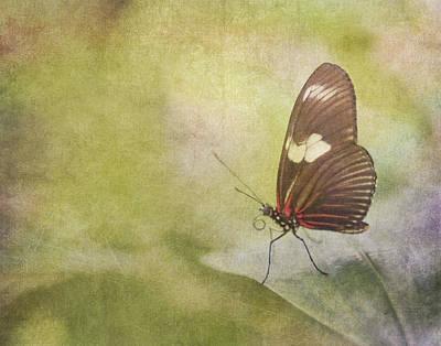 Fly Away Art Print by David and Carol Kelly