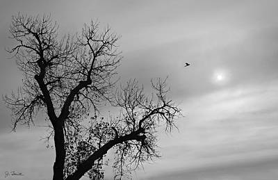 Photograph - Fly Away by Joe Bonita