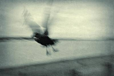 Photograph - Fly Away by Patricia Strand