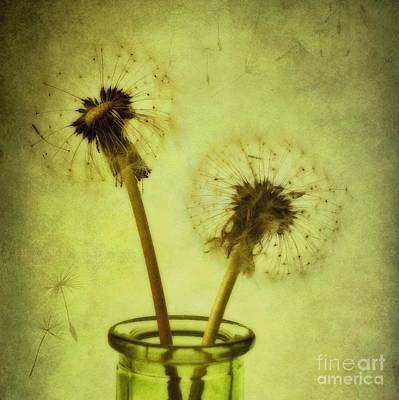 Green Tones Photograph - Fly Away by Priska Wettstein