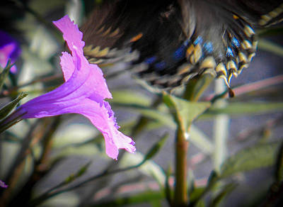 Photograph - Fly Away Swallowtail by Christy Usilton