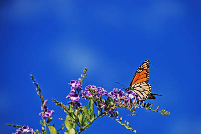 Photograph - Fly Butterfly Into The Bright Blue Sky by Ankya Klay