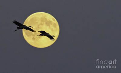 Moonlight Flight Art Print