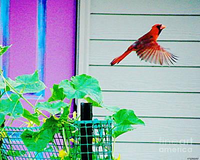 Digital Art - Fly By by Lizi Beard-Ward