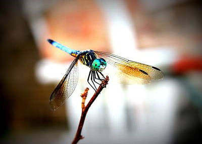 Photograph - Fly Dragon Free by Faith Williams