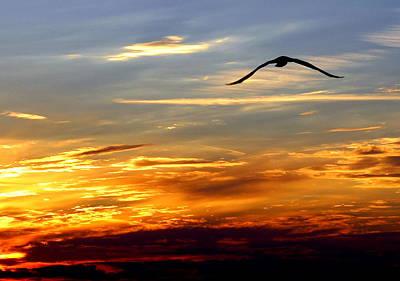 Photograph - Fly Free by Faith Williams