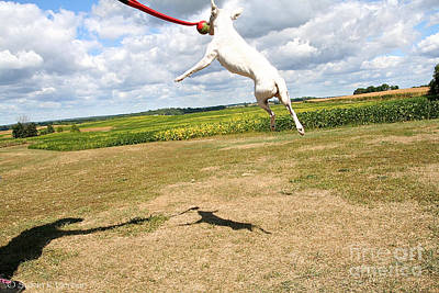 Photograph - Fly High by Susan Herber