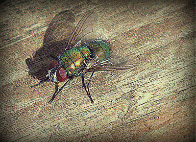 Fly Impressions Art Print