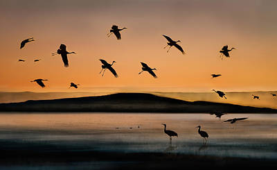 Crane Photograph - Fly-in At Sunset by Shenshen Dou