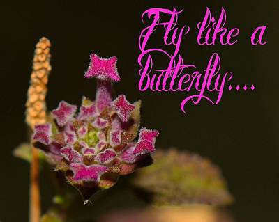 Photograph - Fly Like A Butterfly by Old Pueblo Photography