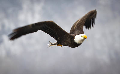 Photograph - Fly Like  A Eagle by Ricky L Jones