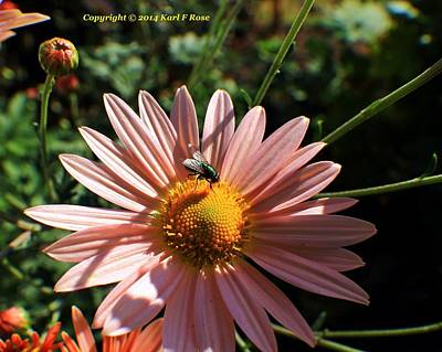 Nautical Animals - Fly on a flower 2 by Karl Rose