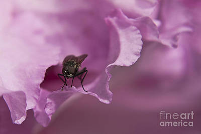Photograph - Fly On A Rhododendron by Terri Waters