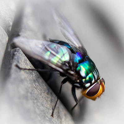 Photograph - Fly On Tyre by Brad Grove