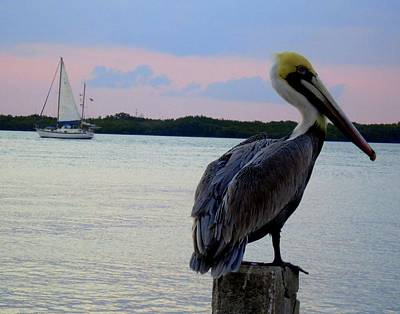 Photograph - Fly Pelican  by Robert Francis
