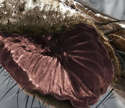 Fly Proboscis Art Print