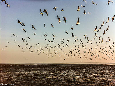 Kornrawiee Photograph - Fly To The Sun by Kornrawiee Miu Miu