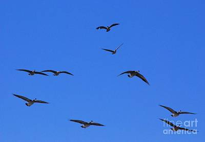 Photograph - Flyin Geese by Mark McReynolds