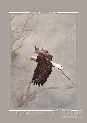 Photograph - Flying Bald Eagle Christmas Cards by Jai Johnson
