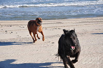 Dog Photograph - Flying Beach Stampede by Lee Wilson