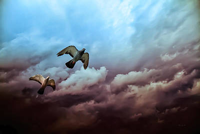 Pigeon Photograph - Flying Before The Storm by Bob Orsillo