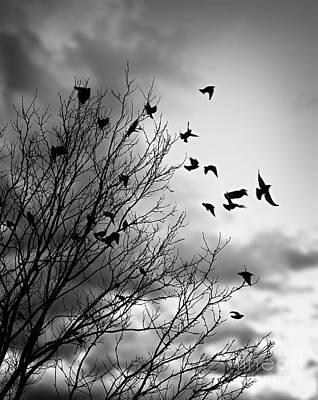 Wings Photograph - Flying Birds by Elena Elisseeva