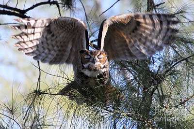 Photograph - Flying Blind - Great Horned Owl by Meg Rousher
