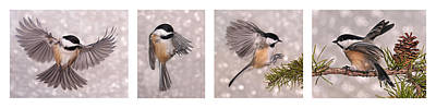 Photograph - Flying Chickadees by Leda Robertson