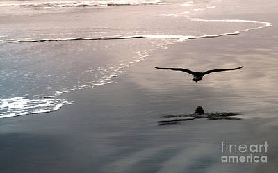 Flying Close To The Ground Art Print by Gregory Dyer