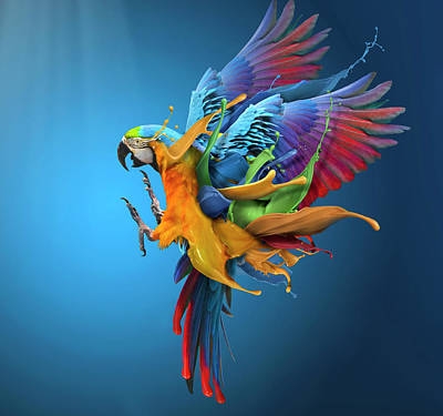 Parrots Wall Art - Photograph - Flying Colours by Sulaiman Almawash