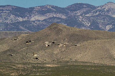 Photograph - Flying Cranes Against New Mexico Moutains by Jean Noren