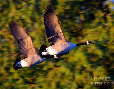 Photograph - Flying Duo by Terry Elniski