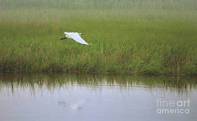 Photograph - Flying Egret by Rima Biswas