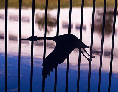 Flying Fence Art Print by Tara Lynn