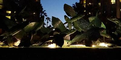 Photograph - Flying Fish At Night by Keith Stokes