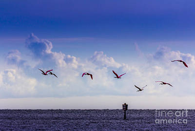 Spoonbill Wall Art - Photograph - Flying Free by Marvin Spates