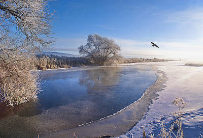 Flying Free On A Winter's Day Art Print