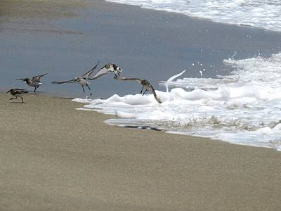 Sandpipers Painting - Flying From The Water by Zina Stromberg