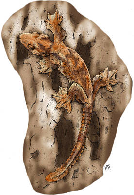 Flying Gecko Art Print