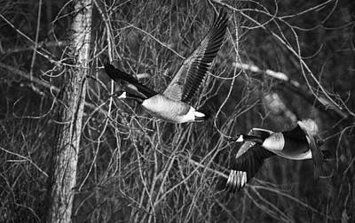 Fox Valley Photograph - Flying Geese In Black And White by Thomas Young