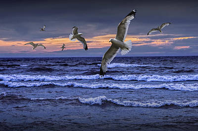 Photograph - Flying Gulls At Sunset Over Lake Michigan by Randall Nyhof
