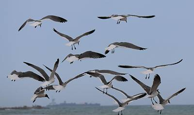 Photograph - Flying Gulls  by Christy Pooschke