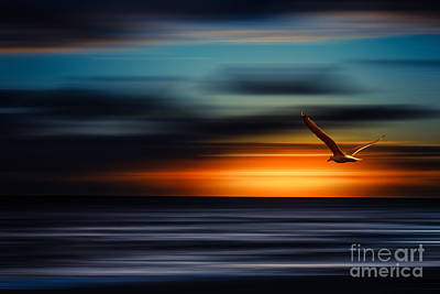 Flying Into The Sunset Art Print
